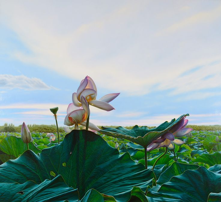 Lotus, 2014 oil on canvas  www.luigipellanda.it  #lotus #painting #luigipellanda #luigi #pellanda #flowers