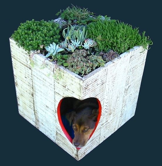 Planter | 15 Unconventional Dog Houses