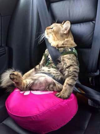 This must be one calm cat! I could never do this with mine!!