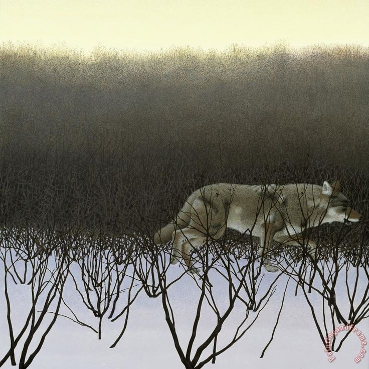 Alex Colville Coyotes And Alders painting - Coyotes And Alders print for sale