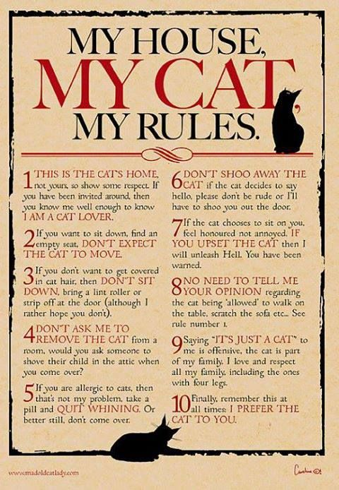 Cat Rules!! I want this hanging in the apartment