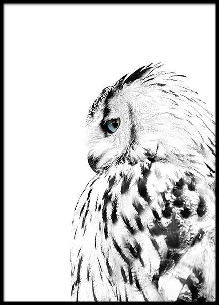 Poster met foto van een witte uil | Posters | Desenio