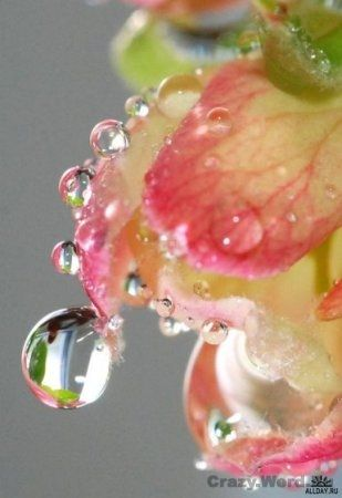 on the tip of a petal