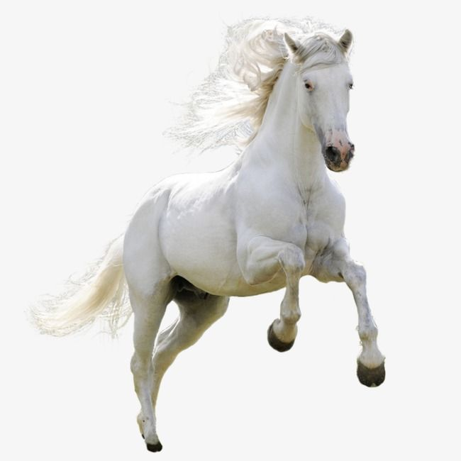 Horse Horse Clipart White Png Transparent Clipart Image And Psd File For Free Download Horses Horse Clip Art Animals