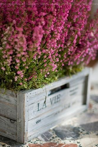 Gypsy Purple home. Fresh Flowers, Pretty In Pink, Beautiful Flowers, Pink Flowers, Decoration Plante, Purple Home, Container Gardening, Outdoor Gardens, Planting Flowers