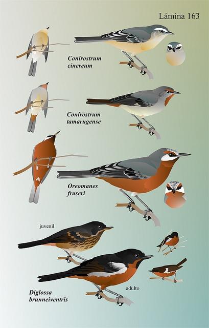 Daniel Martínez Piña | Las Aves de Chile, Nueva Guía de Campo