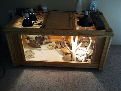 bearded dragon tanks | Bearded Dragon . org • View topic - how much could i sell this for?