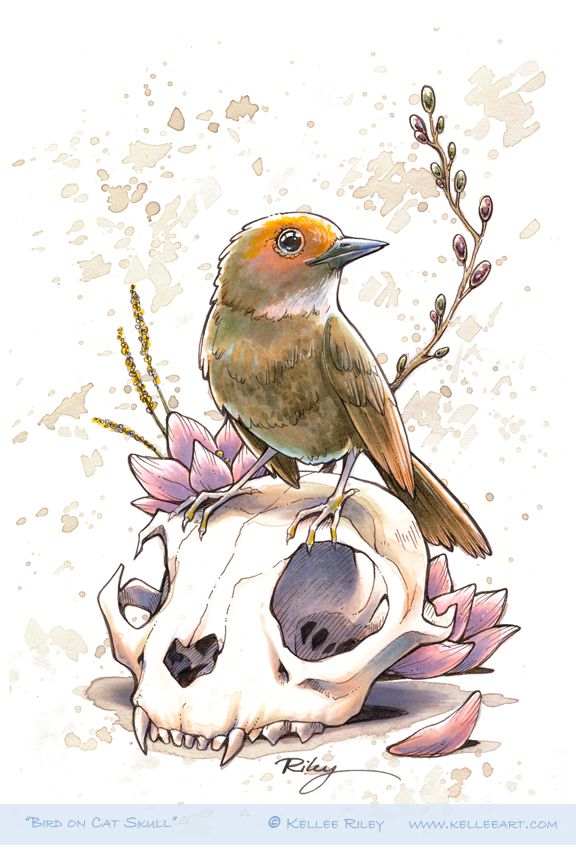 Bird on Cat Skull by KelleeArt