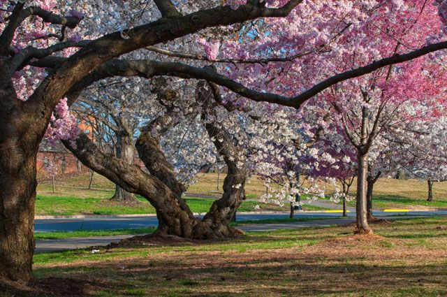 35 places to photograph in NJ There's a reason New Jersey is called The Garden State – it's not a misnomer. And there are a plethora of locations for photogenic opportunities. New Jersey has variety – every season offers something unique…