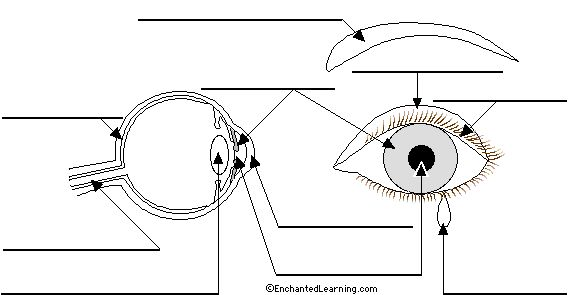 Label The Eye In German Printout Eye Anatomy Diagram Diagram Of The Eye Eye Anatomy