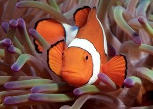 Digital Explorer oceans resources