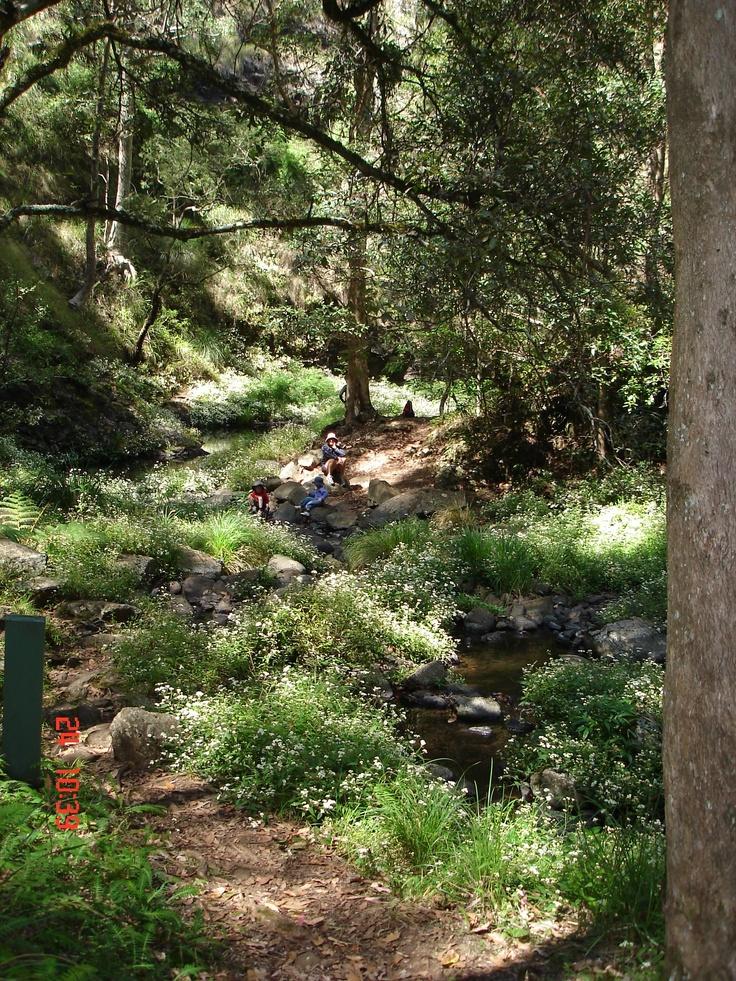 Goomburra Forest walk Qld