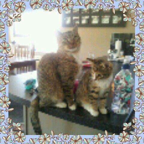 Abby / Franny