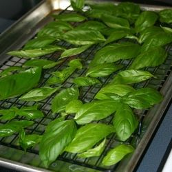 An easy way to dry your own herbs in the oven.