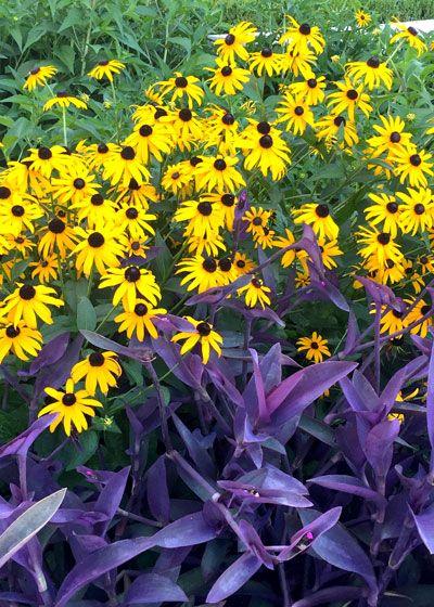 ... Flower Garden Ideas Texas