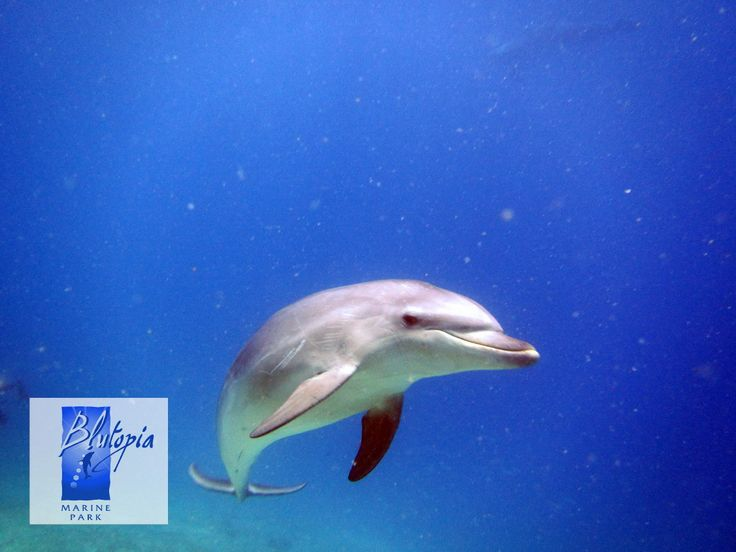 Dolphin visitng us while diving in Makri