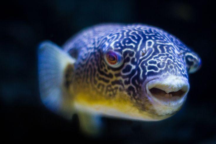 96 Best Images About Aquarium Fish On Pinterest Cichlids