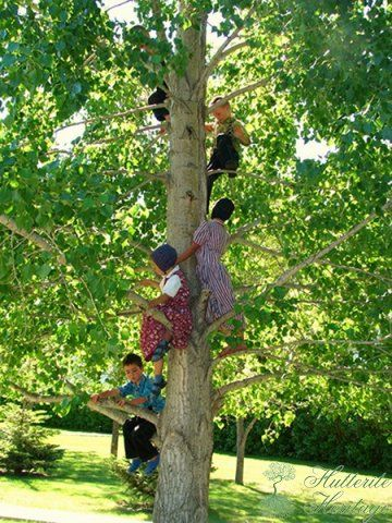 Amish Kids: Kids Plays, Kids Climbing, Amish Children, Amish Life, Kids Trees, Amish Country, Hoods Canal, Aunt, 3Amish Kids 3