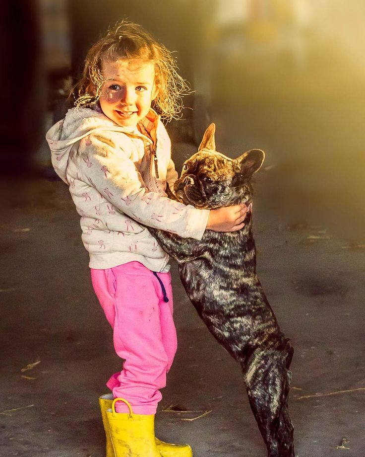 Dancing the gigue.  #frenchbulldog #dancingdog #teachingfenchtodance #gremlyn #cutenessoverloade  #dubbophotographer www.jackysphotos.com