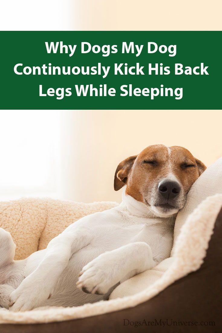 Why Does My Dog Kick His Legs While Asleep Dogs Dog Leg Dog Behavior