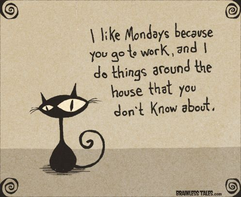 At least the kitty likes Mondays.