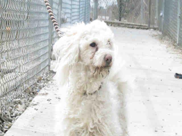 Toronto Animal Service Dogs For Adoption