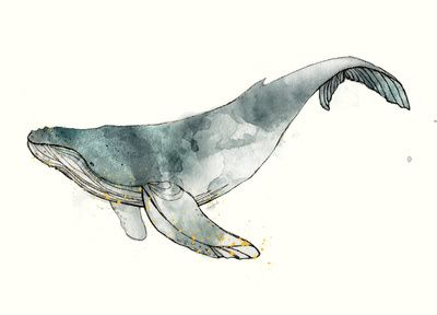 BOM baleia jubarte aquarela                                                                                                                                                                                 Mais