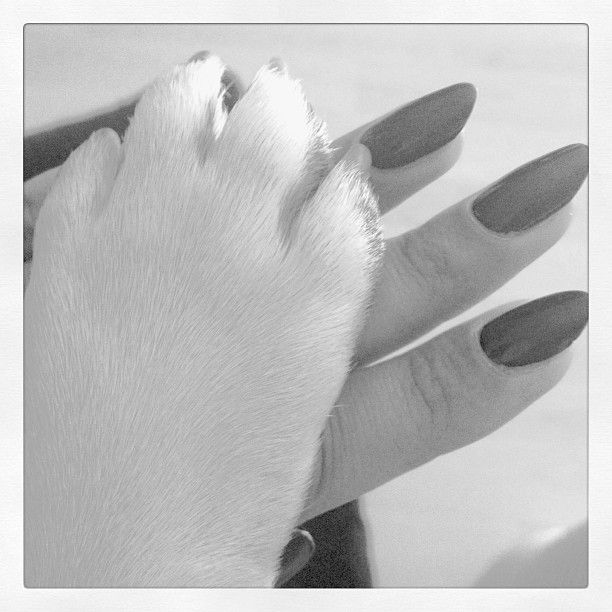 StyleSociety Pugs | PAWS UP! CLAWS OUT!