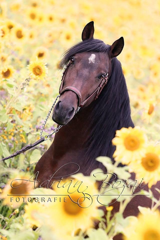 25 best ideas about Horse Flowers on Pinterest Pretty