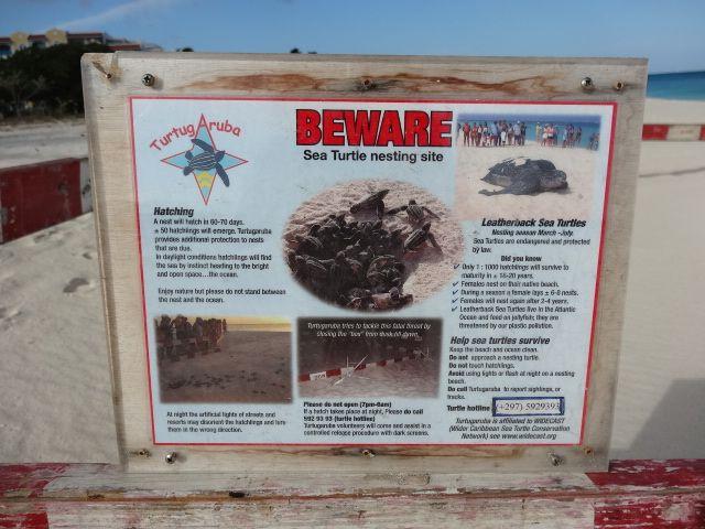 Sea Turtle Nesting Site (Eagle Beach)