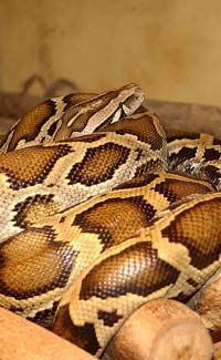Fun Snake Facts for Kids - Interesting Information about Snakes