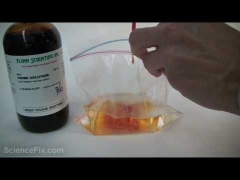 Osmosis Experiment: Seeing Osmosis in Action (with video!)