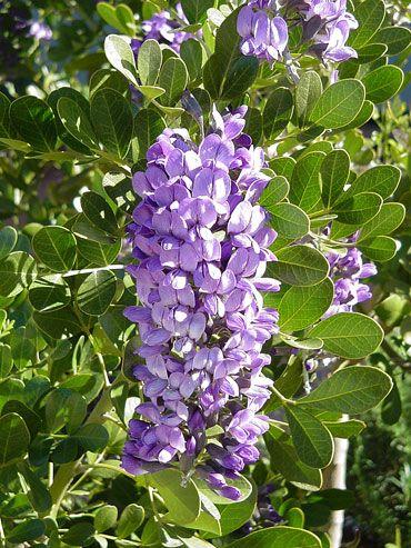 22 best Drought-Tolerant Plants images on Pinterest ...