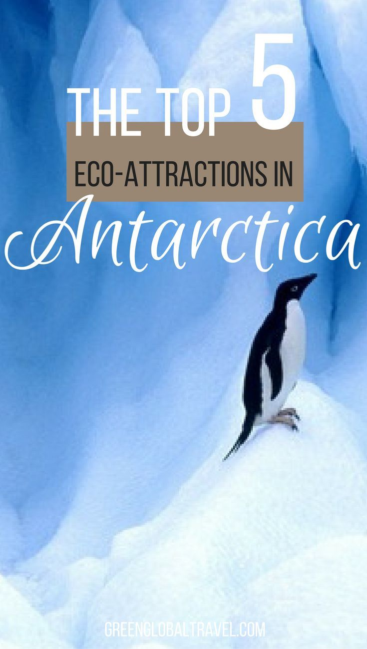 Read about our top five Antarctica Ecotourism Attractions | Drake Passage | Shetlands Islands | Whales | Lemaire Channel |
