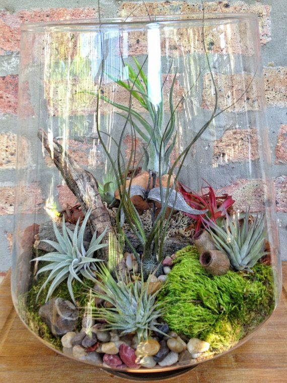 Large Low Maintenance Air Plant Terrarium - A Unique Birthday or Fathers Day Gift