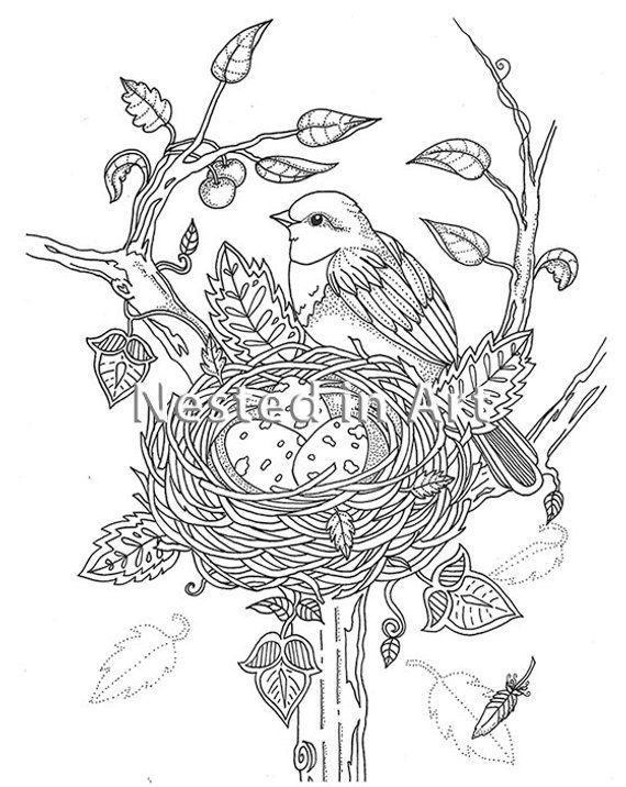 Adult Coloring Page Bird With Bird S Nest Original Art Digital