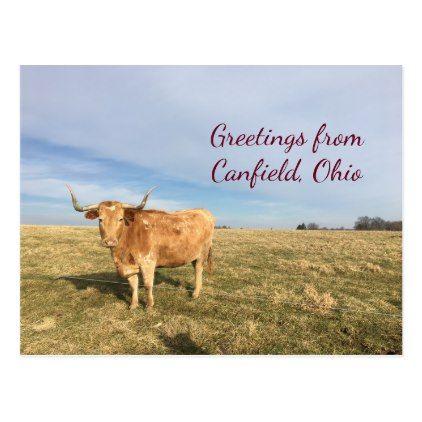 Farm Longhorn Cow Canfield Ohio Postcard - postcard post card postcards unique diy cyo customize personalize