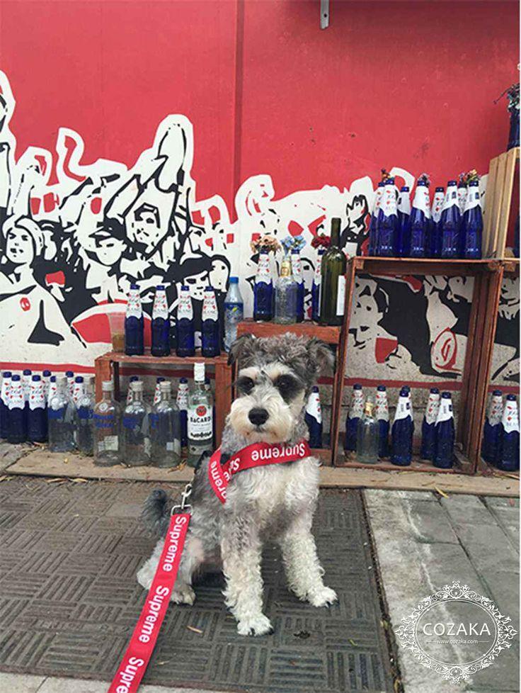 ハーネス調整可 リード セット 小型犬用品 中型犬用品 シュプリーム