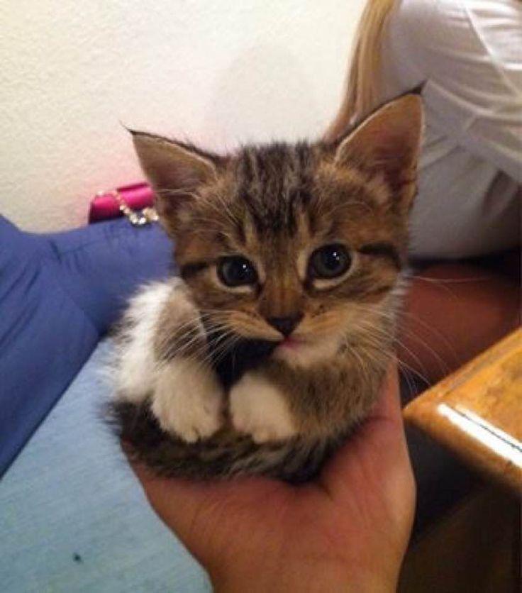 カワイイ猫画像 115|ねこLatte+