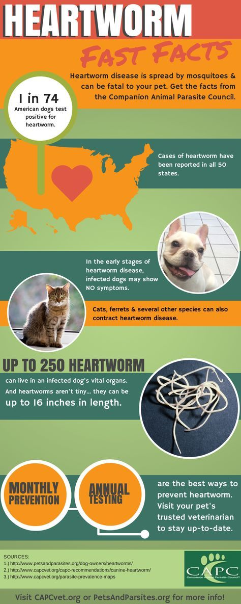 Get the facts about heartworm and pets in this infographic. Talk to your trusted veterinarian about preventing your pet from becoming infected with heartworm.