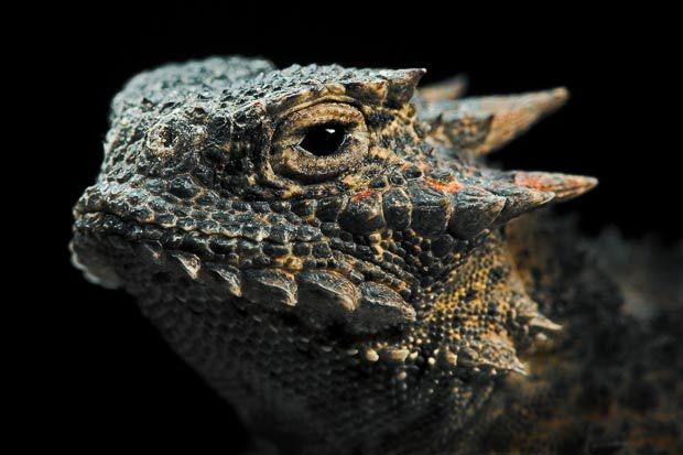 Reptiles and amphibians photographed by Igor Siwanowicz - Telegraph
