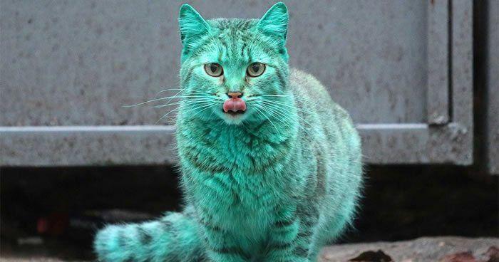 Je toto nový druh mačky?