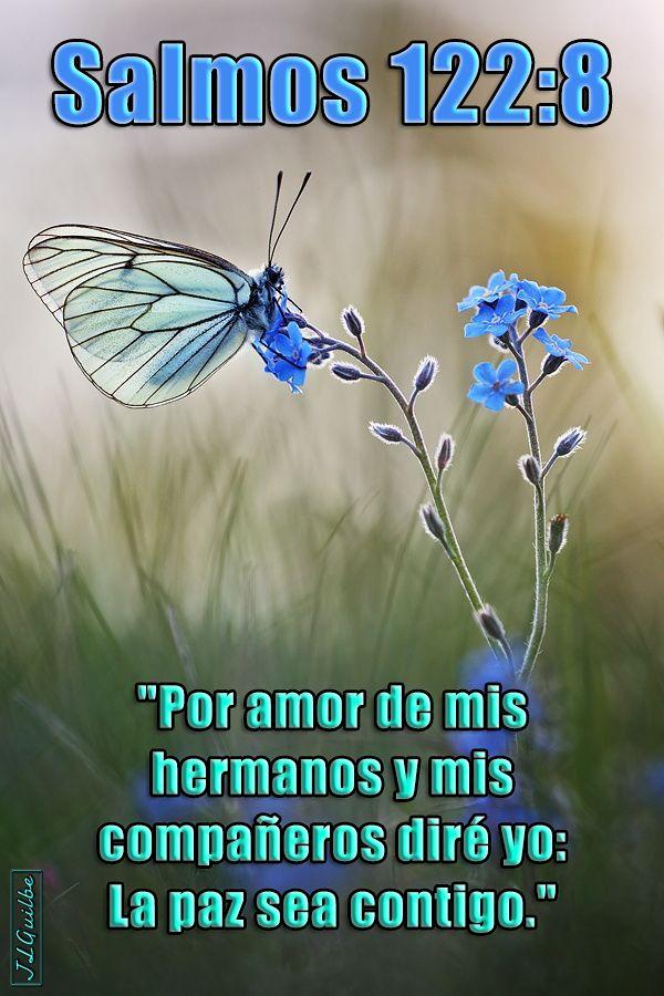 Salmos 122 8 Por Amor De Mis Hermanos Y Mis Companeros Dire Yo La Paz Sea Contigo ธรรมชาต ร ปภาพ ดอกไม
