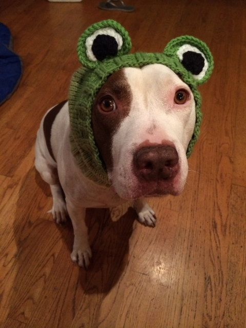 Hey, I found this really awesome Etsy listing at https://www.etsy.com/listing/176160945/frog-dog-snood-pattern