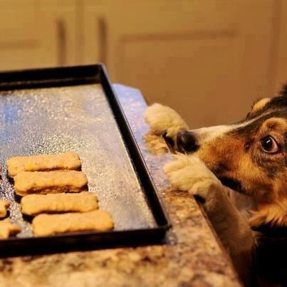 dog biscuits2