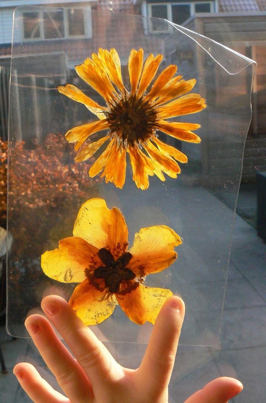 Herfst - herfstbladeren lamineren - Van je knutselei kwijt