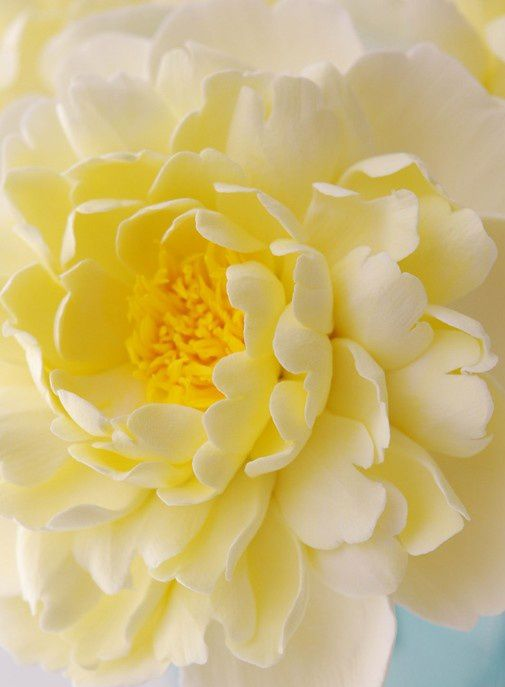~✿ڿڰۣ Soft Yellow Dahlia
