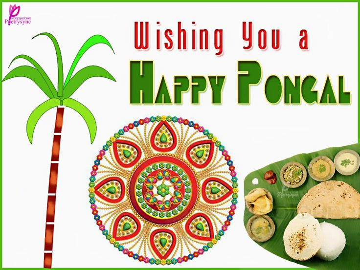 Happy Pongal Festival Card for Wishes with Greetings Wallpaper