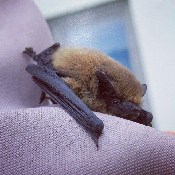 99 Best Images About My Bat Habit On Pinterest