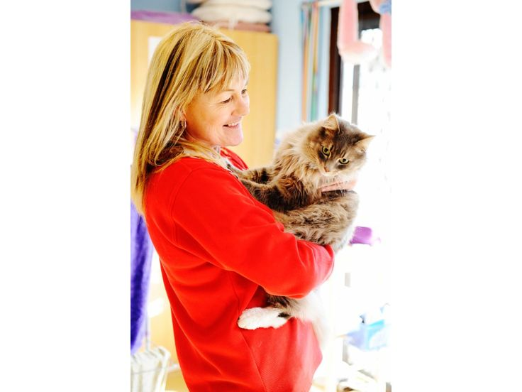 Badger Creek Boarding Kennels & Cattery - Cat Boarding - Healesville, VIC - Yellow Pages®